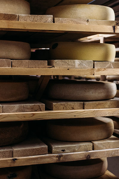 Cheese aging on wooden shelves