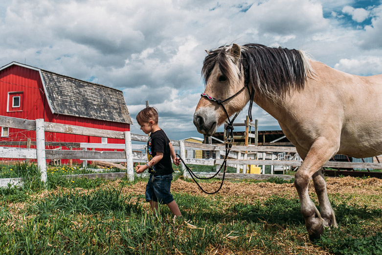 Daily life on an acreage in Alberta: young boy walking with beautiful horse