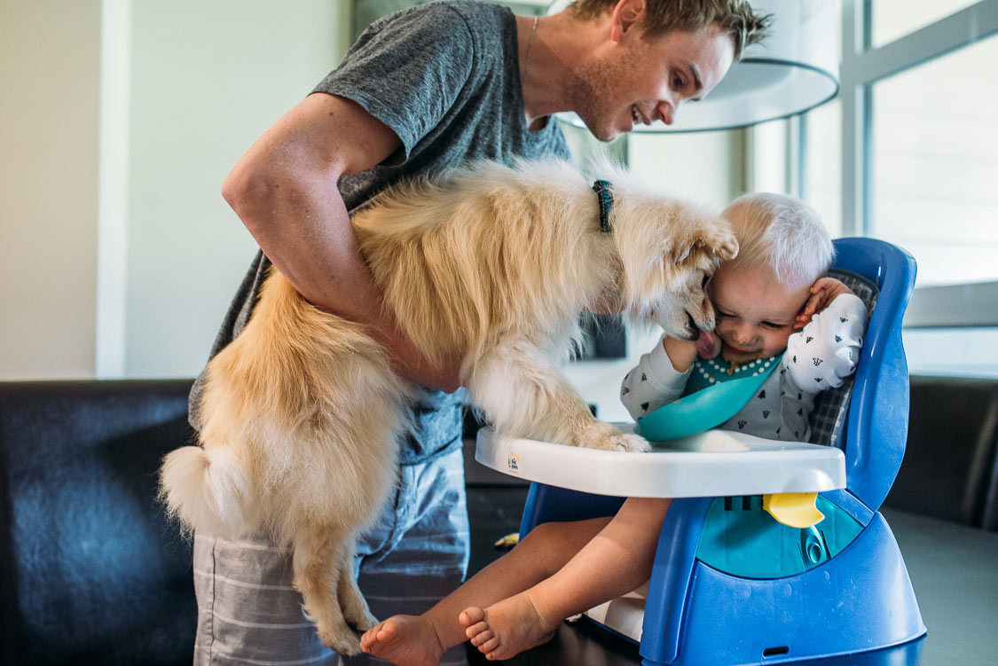 Father holding dog licking food on toddler's face